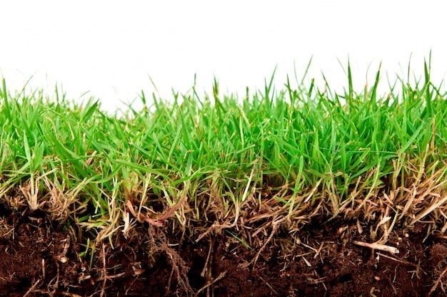 Fresca primavera erba verde con terreno isolato su sfondo bianco.