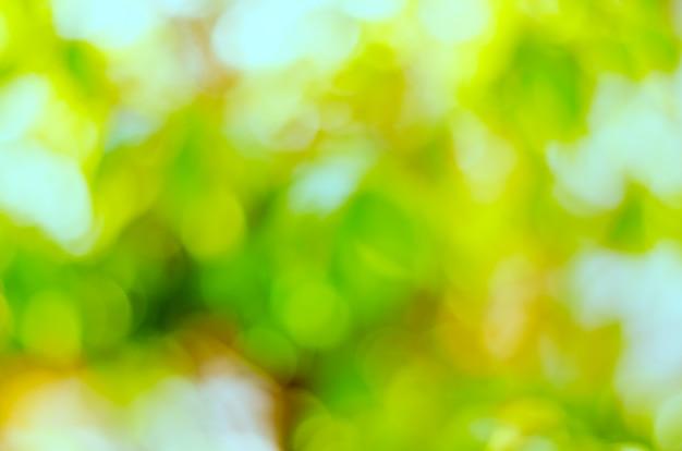 Fresco stato e sfocatura foglie verdi su sfondo verde