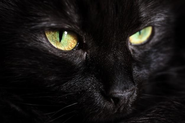 Fronte sveglio di un gatto nero con il primo piano degli occhi verdi