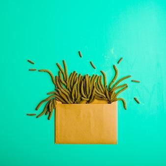 Frusta di betulla su sfondo verde con busta