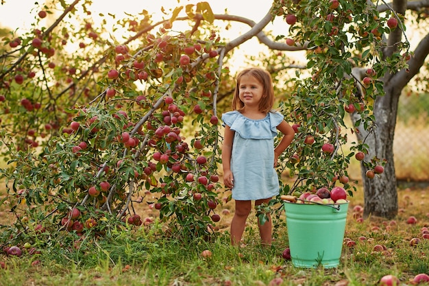 Frutta di cibo del bambino al raccolto di caduta.