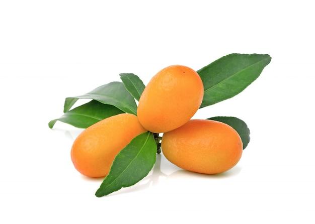 Frutti del kumquat con la foglia isolata sulla parete bianca
