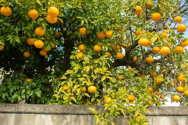 Frutti di arance con cielo blu
