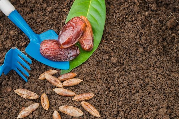 Frutti e semi della data su terreno con attrezzatura agricola