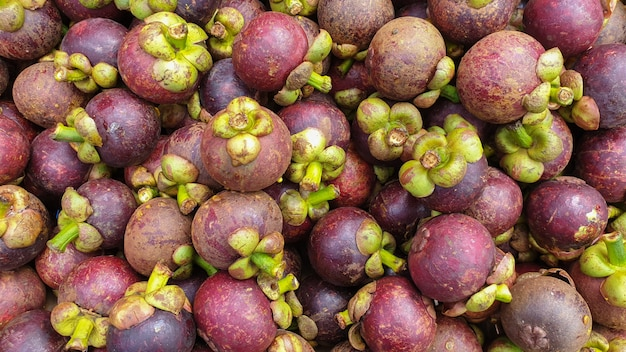 Frutto antiossidante della vitamina c del mangostano del sud-est asiatico tailandia