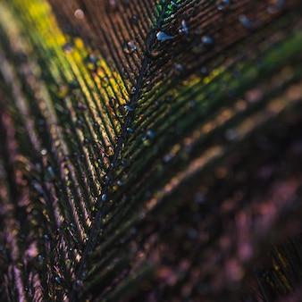 Full frame di colorato lucido piuma di pavone con gocce d'acqua