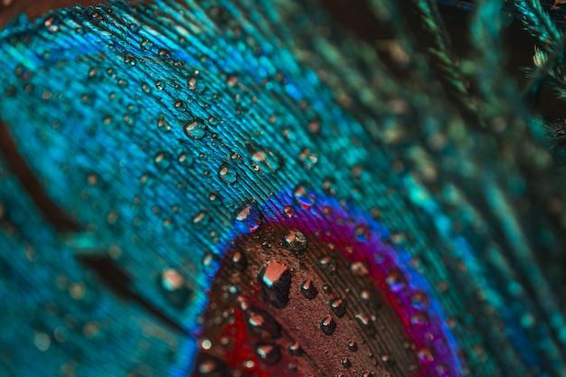 Full frame di gocce d'acqua sul pennacchio colorato di pavone