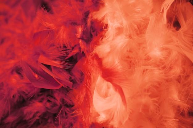 Full frame di morbido sfondo di piume