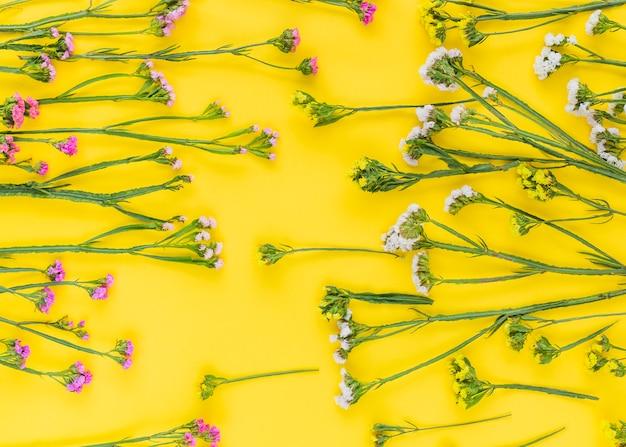 Full frame di rosa; fiori bianchi e gialli disposti su sfondo colorato
