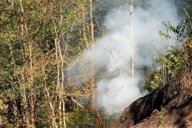 Fumo fuoco di prateria. l'erba secca divampa tra i cespugli e la distruzione delle foreste