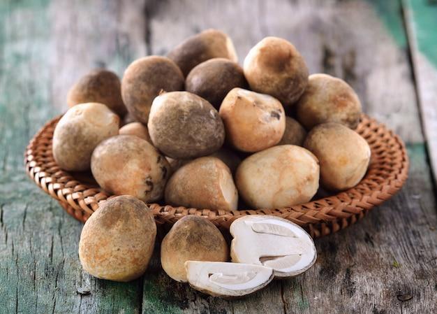 Funghi di paglia su legno