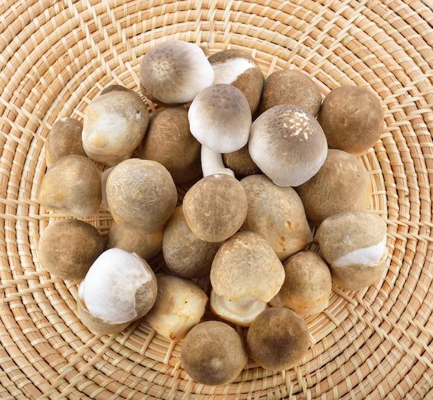 Funghi di paglia