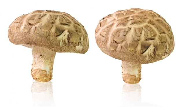 Funghi di shiitake freschi isolati su bianco