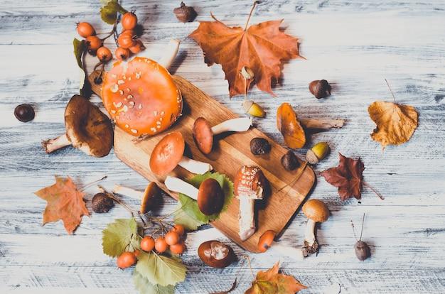 Funghi e foglie intorno a bordo
