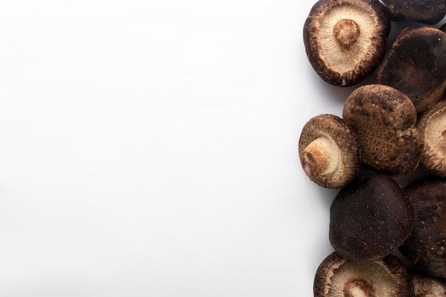 Funghi marroni su fondo bianco
