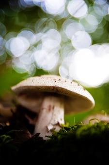 Funghi nella foresta molto colorati circondati da muschio e umidità e grande sfocatura