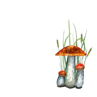 Funghi porcini aspen. illustrazione ad acquerello