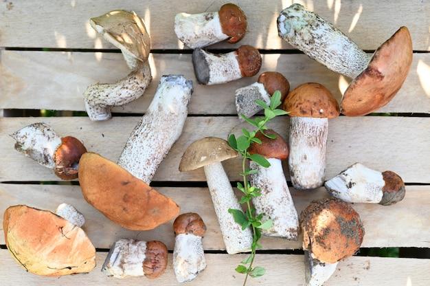 Funghi porcini della foresta su un fondo di legno