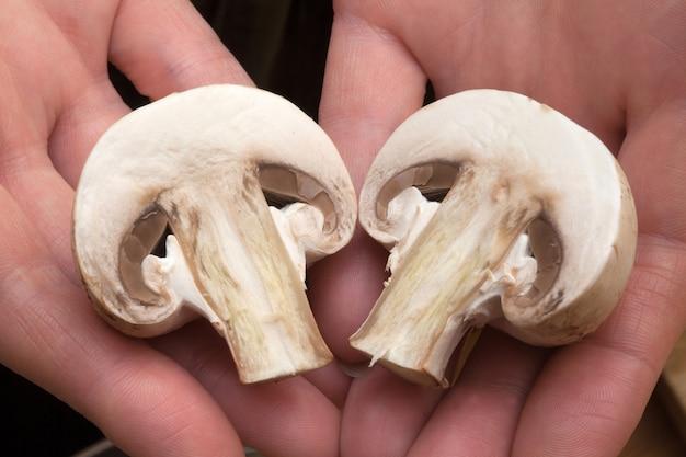 Funghi tagliati a metà