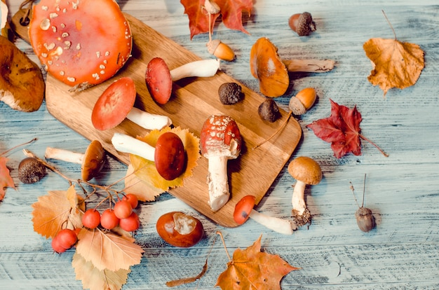 Funghi tra foglie e ghiande