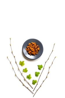 Fungo chaga. composizione di pezzi secchi di chaga fungo chaga in un piatto e rami di betulla e foglie di ribes isolato su uno sfondo bianco. concetto di medicina naturale alternativa.