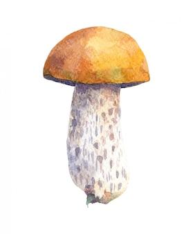 Fungo di bolete della betulla isolato su fondo bianco. illustrazione disegnata a mano dell'acquerello