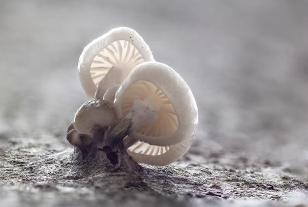Fungo di porcellana su un albero con bella luce