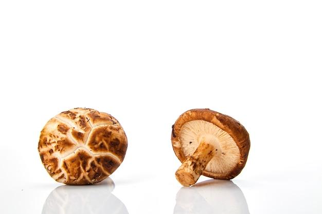 Fungo di shiitake sui precedenti bianchi