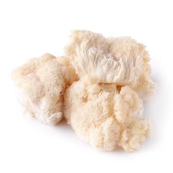 Fungo di yamabushitake o fungo della criniera del leone isolato