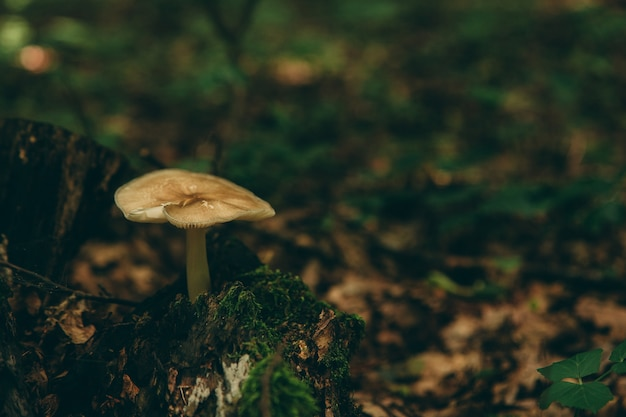 Fungo selvaggio nella foresta, alimento naturale, raccolto di estate.