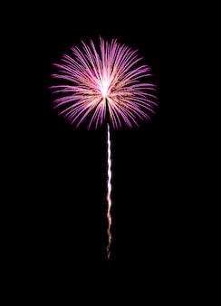 Fuochi d'artificio esplosi rosa e gialli isolati sul nero