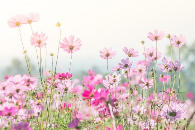Fuoco molle e selettivo di universo, fiore confuso per fondo, piante variopinte