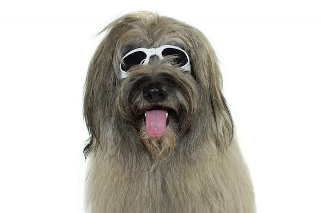 Furry catalan sheepdog indossando occhiali da polso bianco. isolato su priorità bassa bianca.