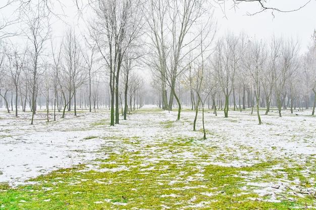 Fuso percorso nevoso che conduce tra gli alberi di faggio nella foresta all'inizio della primavera