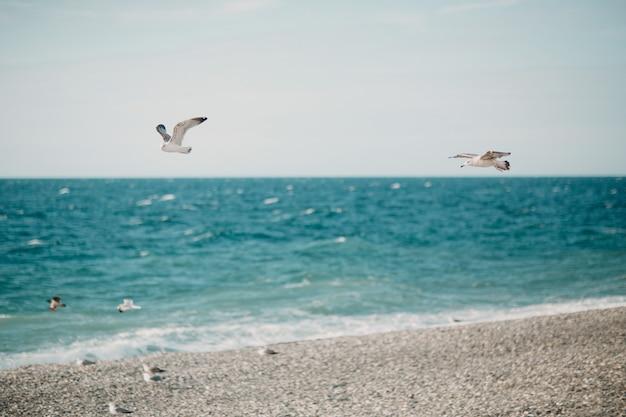 Gabbiani che sorvolano la riva del mare