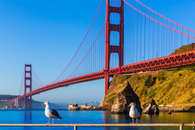 Gabbiano california di san francisco golden gate bridge