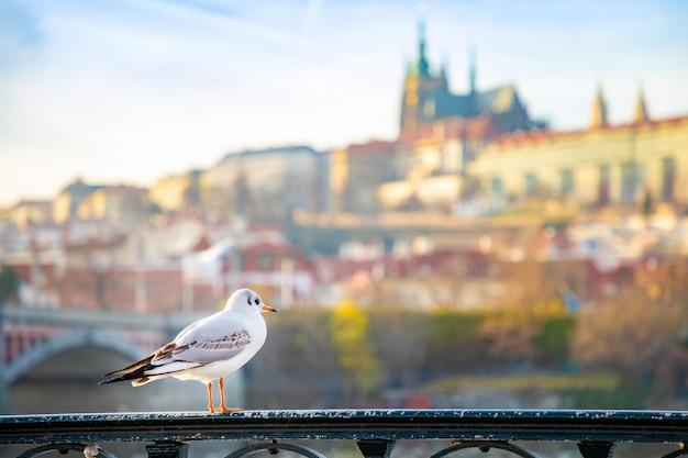 Gabbiano che gelida fra il castello di praga, il cielo del tramonto e la moldava a praga, repubblica ceca