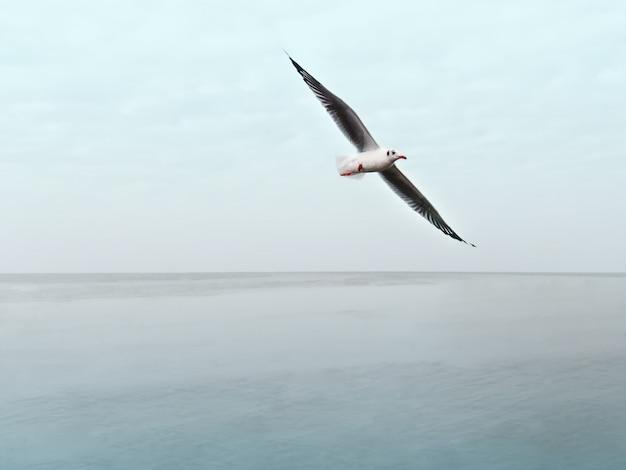 Gabbiano con le ali che sorvolano il mare