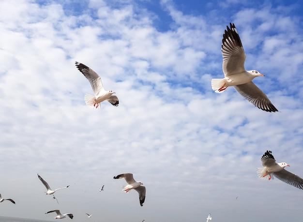 Gabbiano o nok nang nuan volano nel cielo blu, sentono la libertà.