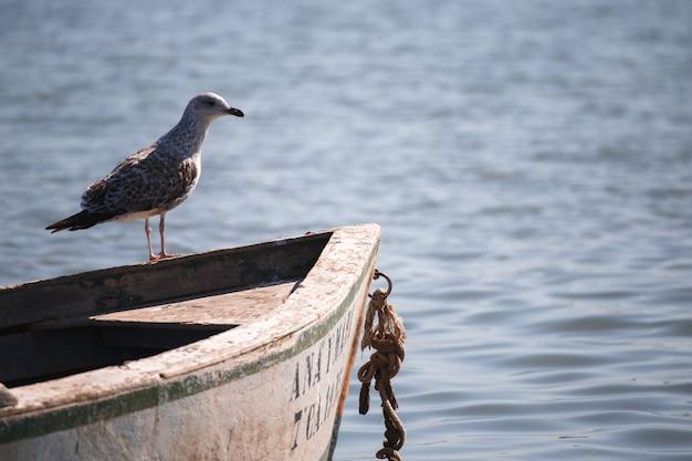 Gabbiano tra barche sull'acqua