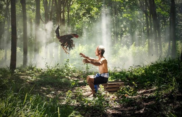 Gallo che combatte il gallo e il proprietario dello zio