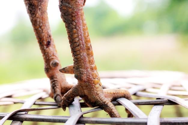 Gambe di prosciutto in campagna.