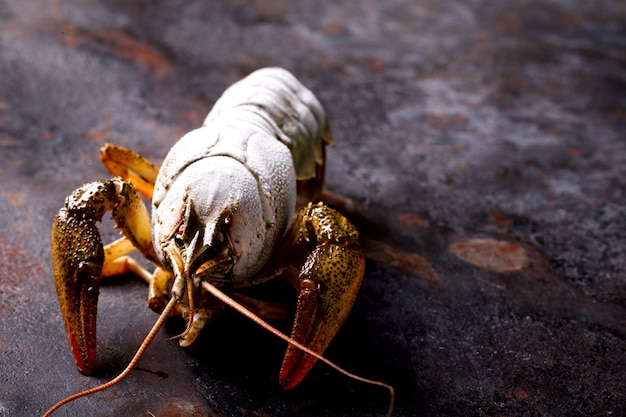 Gamberi crudi, baby lobster. frutti di mare.
