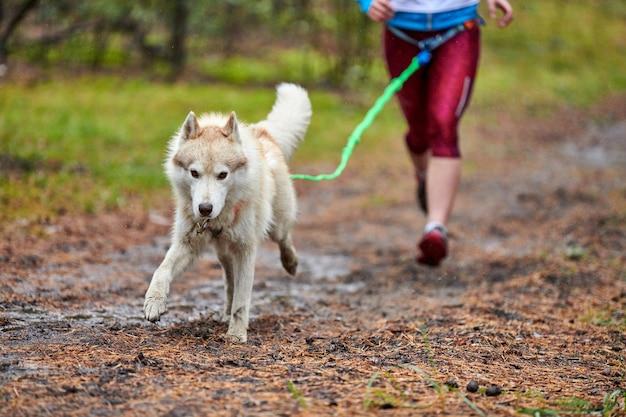 Gara di mushing del cane canicross