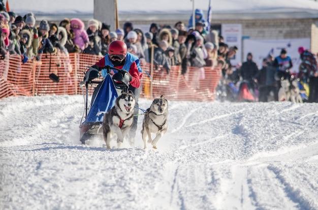Gara di slitte trainate da cani. donna musher e husky squadra di cani da slitta