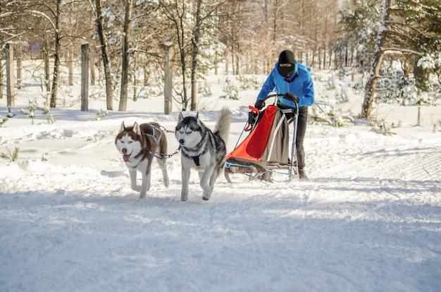 Gara di slitte trainate da cani. equipaggio musher e husky squadra di cani da slitta