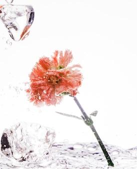 Garofano arancia che cade nell'acqua