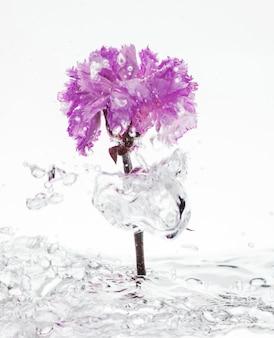Garofano viola che cade nell'acqua