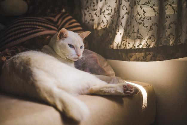 Gatti bianchi sul divano vicino alla finestra con la luce del mattino, gatto che guarda fuori dalla finestra