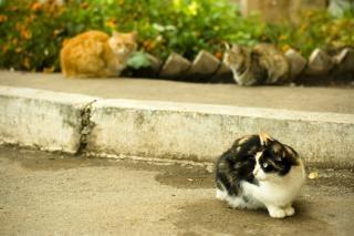 Gatti, felini